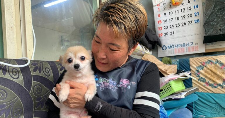 South Korea to grant legal status to animals to tackle abuse